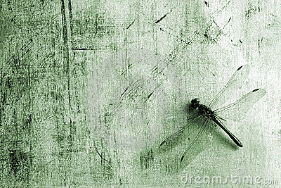 Background with dragonfly