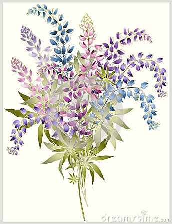 Background from flower of the lupine . Bouquet fro