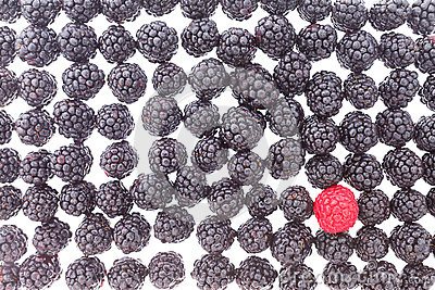 Background of fresh blackberries and one raspberry