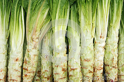Stem lettuce