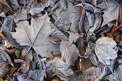 Background of frozen leafs