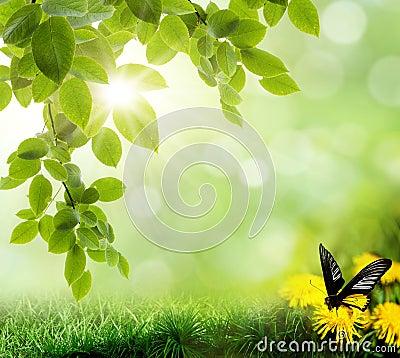 Background of grass. bokeh. The beautiful