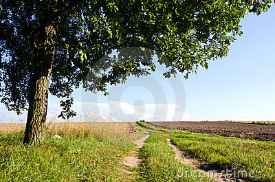 Background gravel road agricultural field oak tree