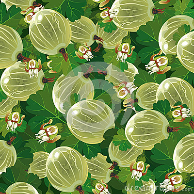 Background of the green gooseberry