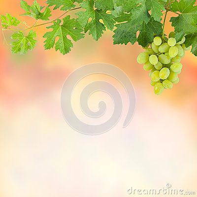 Background with green grapes