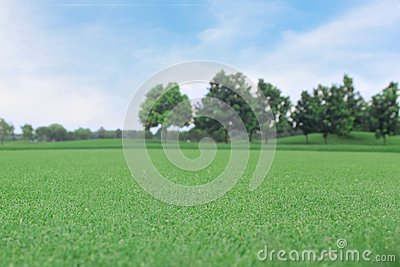 Background of green grass with the tree