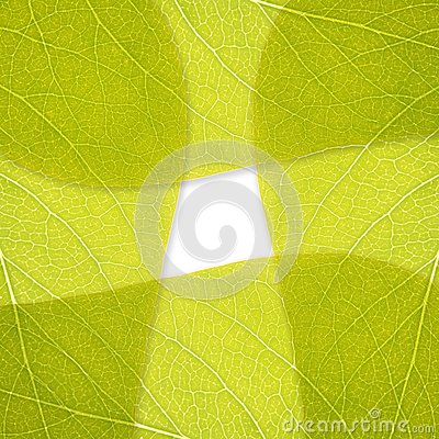 Background Of Green Leaves Stock Photo - Image: 17697210
