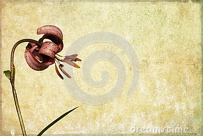 Background image with floral elements