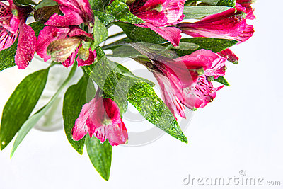 Alstroemeria Flowers Royalty Free Stock Photo - Image: 29734765