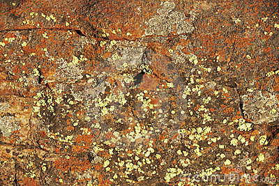Background - Lichen covered cracked rock