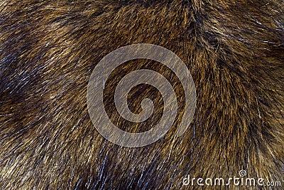 Background of lynx fur