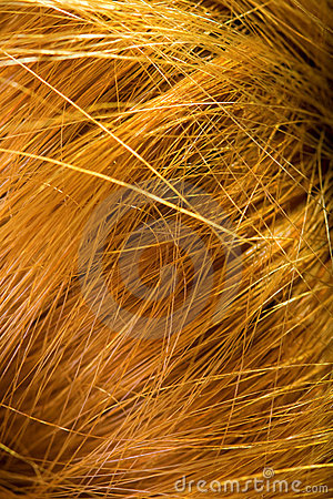Background - macro on human female hair