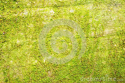 Background of moss