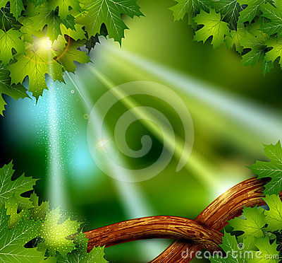 background of the mystical mysterious forest