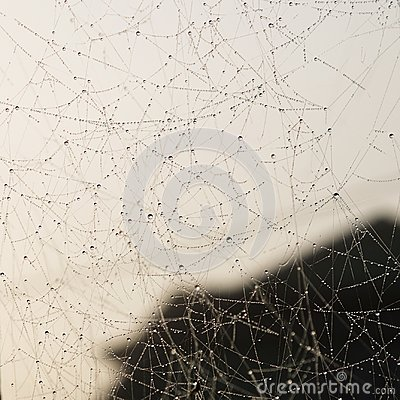 Free Background Of Drops Of Dew On A Cobweb Stock Photography - 118728262