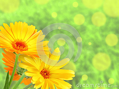 Background with orange flowers