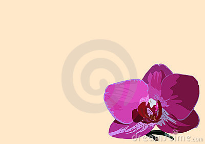 Background with orchid