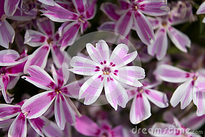 Background - perennial flowers