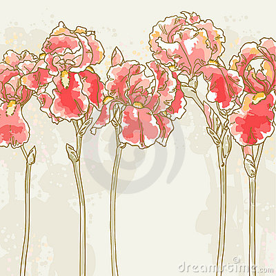 Background with red iris flowers
