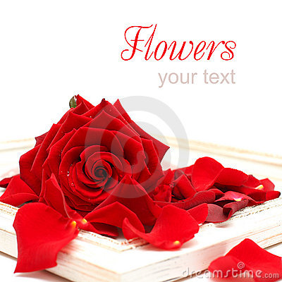 Background with Red Rose and vintage frame