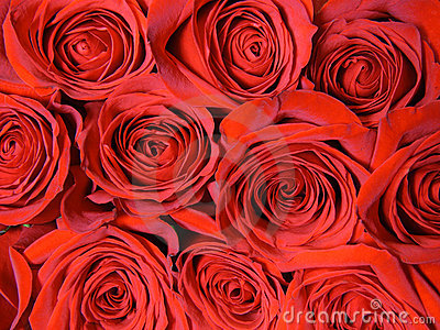 Background from red roses