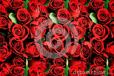 Background of red roses symbolic of love