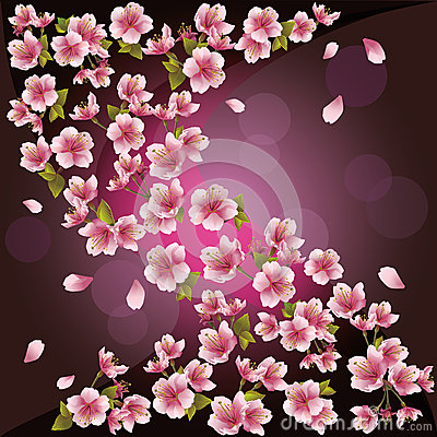 Background with sakura - Japanese cherry tree