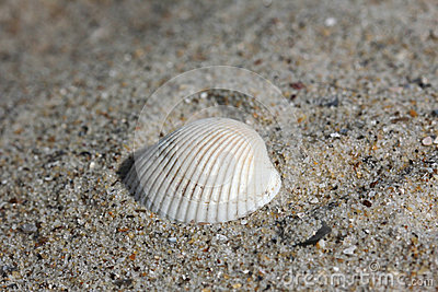 Background of sand with shells