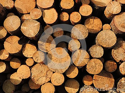 Background of sawn timber