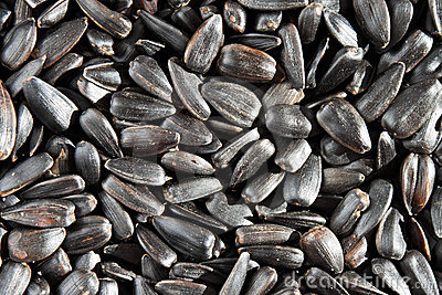 Background of sunflower seeds.