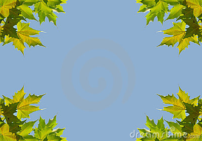 Background with sycamore leaves