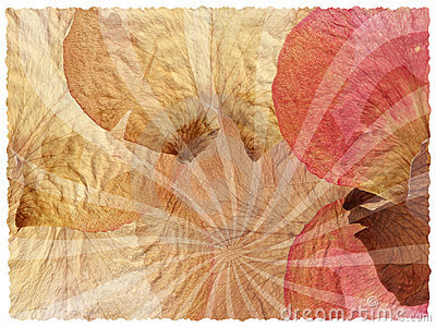 Background texture of rose petals