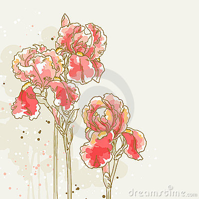 Background with three red iris flowers