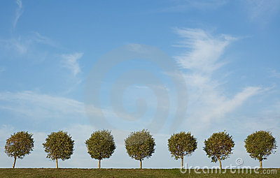 Background of tree alley and blue sky