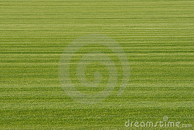 Background Turf Green Grass