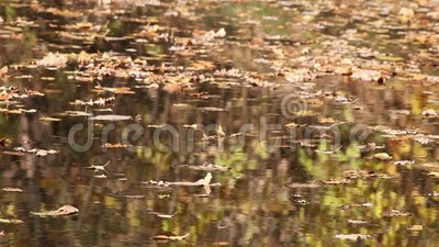 Autumn trees reflecting in water stock video footage