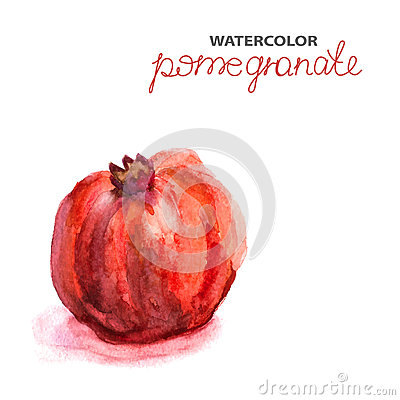 Background with watercolor pomegranate Vector Illustration