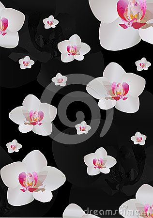 Background with white orchid flowers