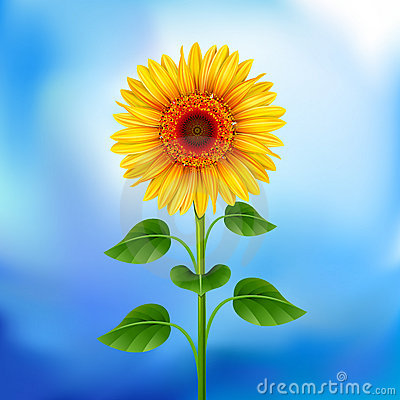 Free Background With Sunflower Stock Photo - 18723530