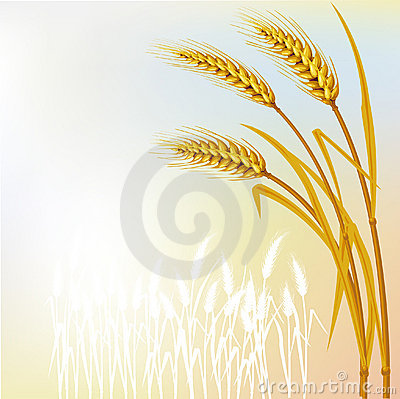 Free Background With Wheat Royalty Free Stock Photos - 11157308