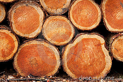 Background wood-piles