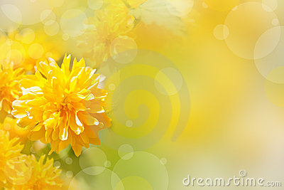 Background with yellow flowers
