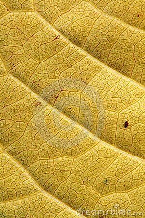 Background of yellow leaf