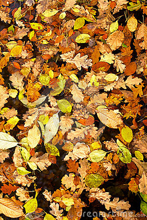 Background of yellow leaves