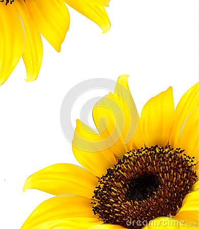 Background with yellow sunflower.