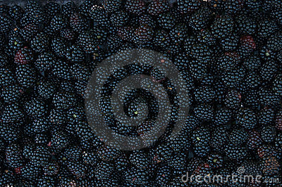 Backgrounds of blackberries