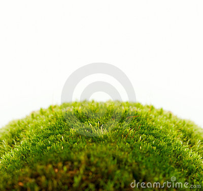 Backgrounds of fresh spring green grass