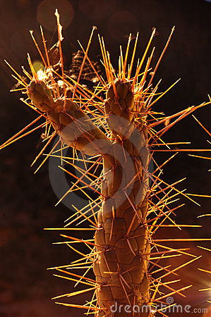 Backlight Cactus #1