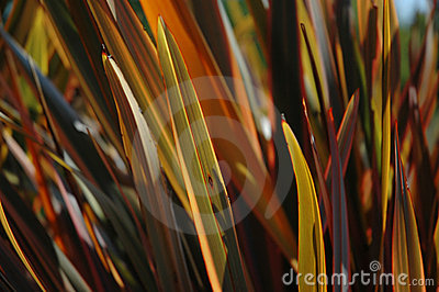 Backlit decorative autumn grass