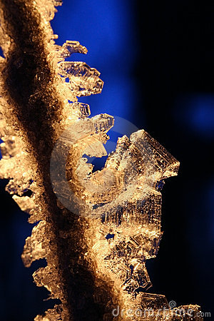 Backlit Golden Hoarfrost Crystals on Branch